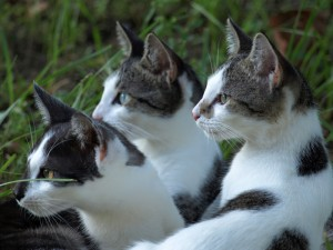 cats-238217