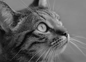 Katze-schww-aufmerksam