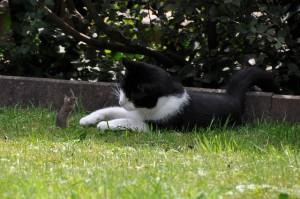 Cat, Play