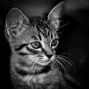 Bereits Katzenkinder können von Katzenpsychologie profitieren