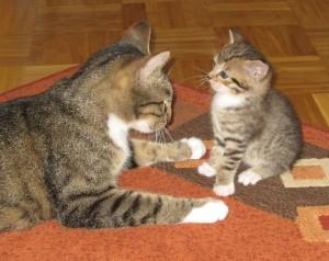 Catkitty