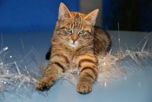 cat-lichterkette