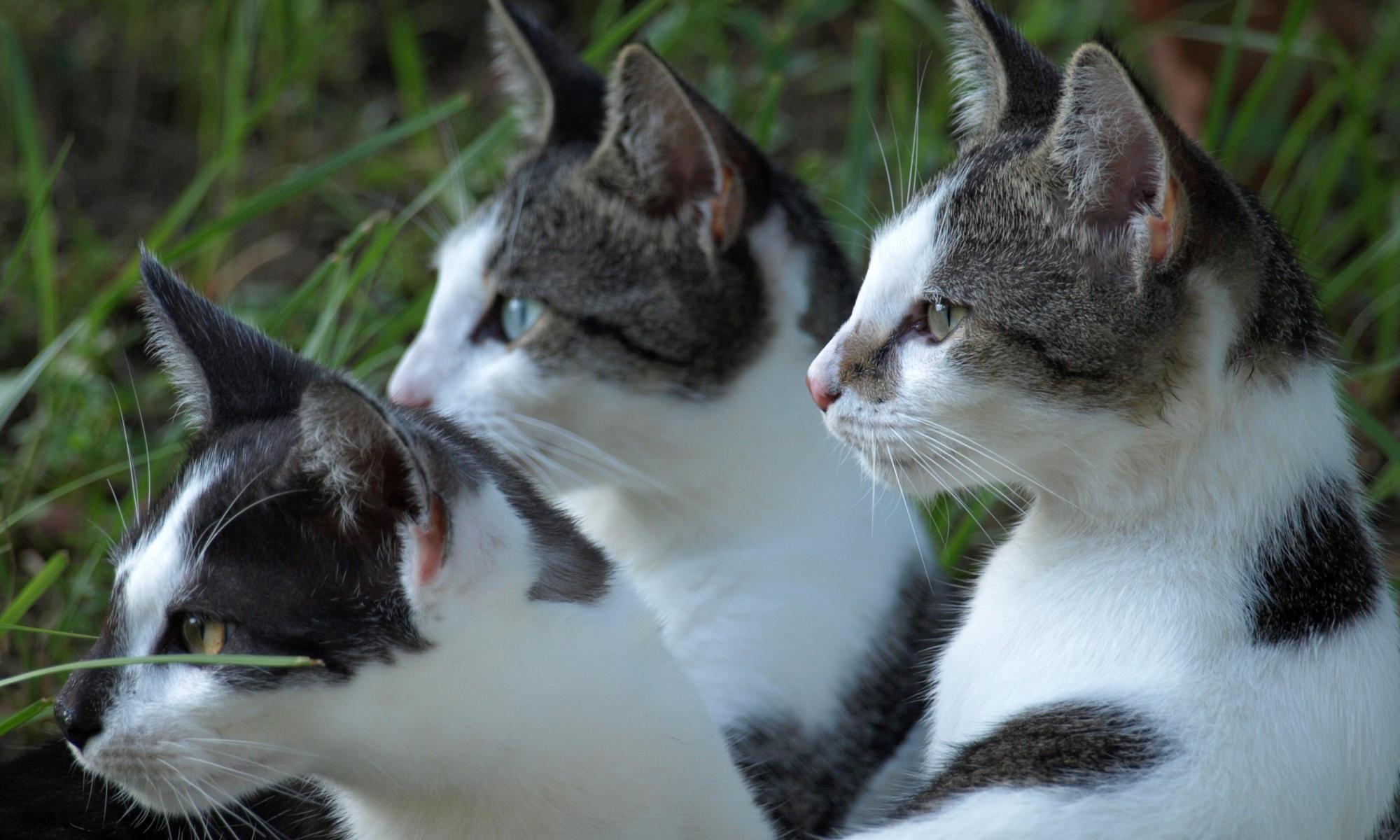 Verhaltensberatung für Katzen und Tierheilpraxis
